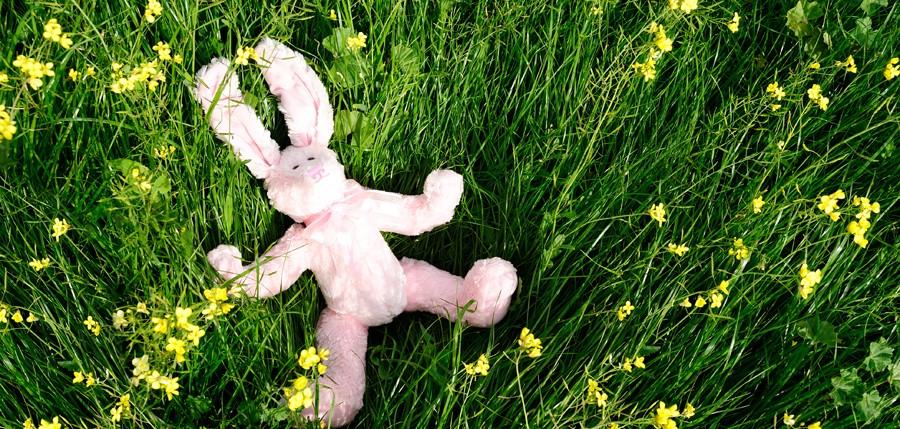 Easter bunny on green grass